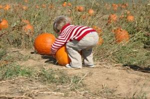 child-picking-pumpkin