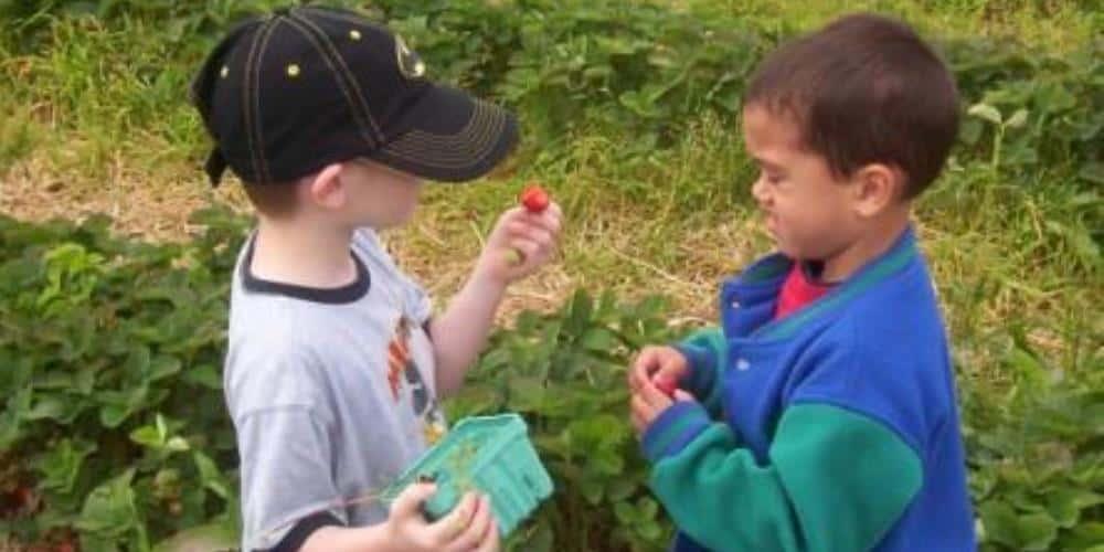 2 boys picking